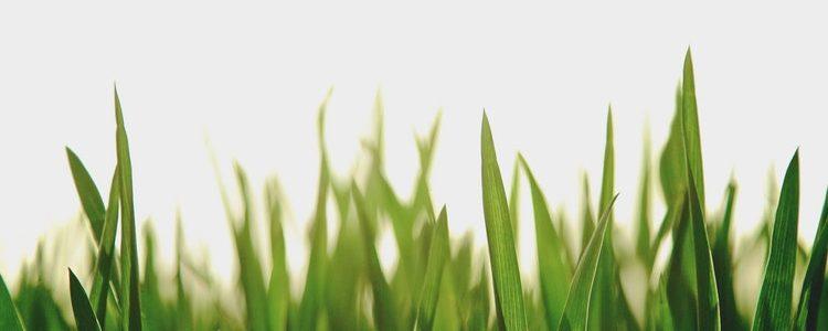 desktop greens